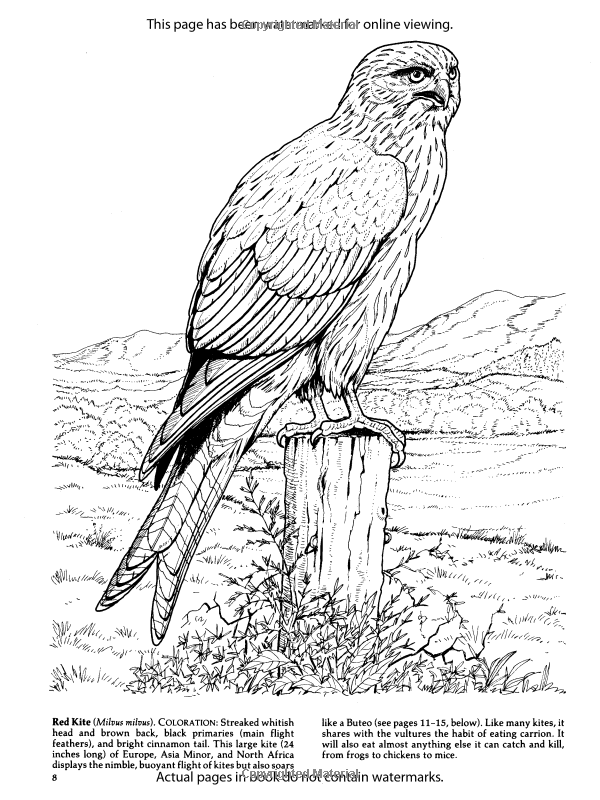 Birds Of Prey Coloring Book Dover Nature Coloring Book Amazon Co