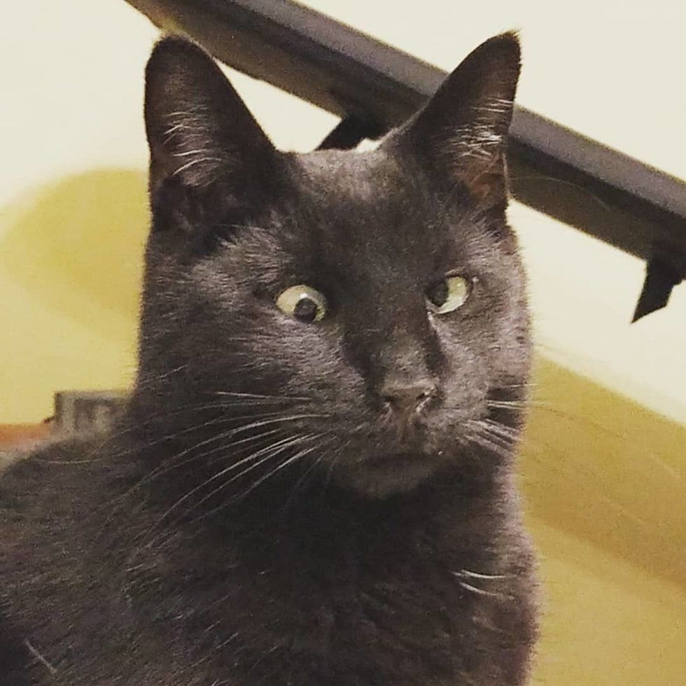 Stray Cat with Crossed Eye Finds Someone He Loves and Won