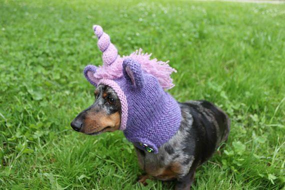 Knitting Pattern Dachshund Unicorn Hood Dog Hat Dogs Pet Etsy Pet Costumes Mini Dachshund Dachshund Training