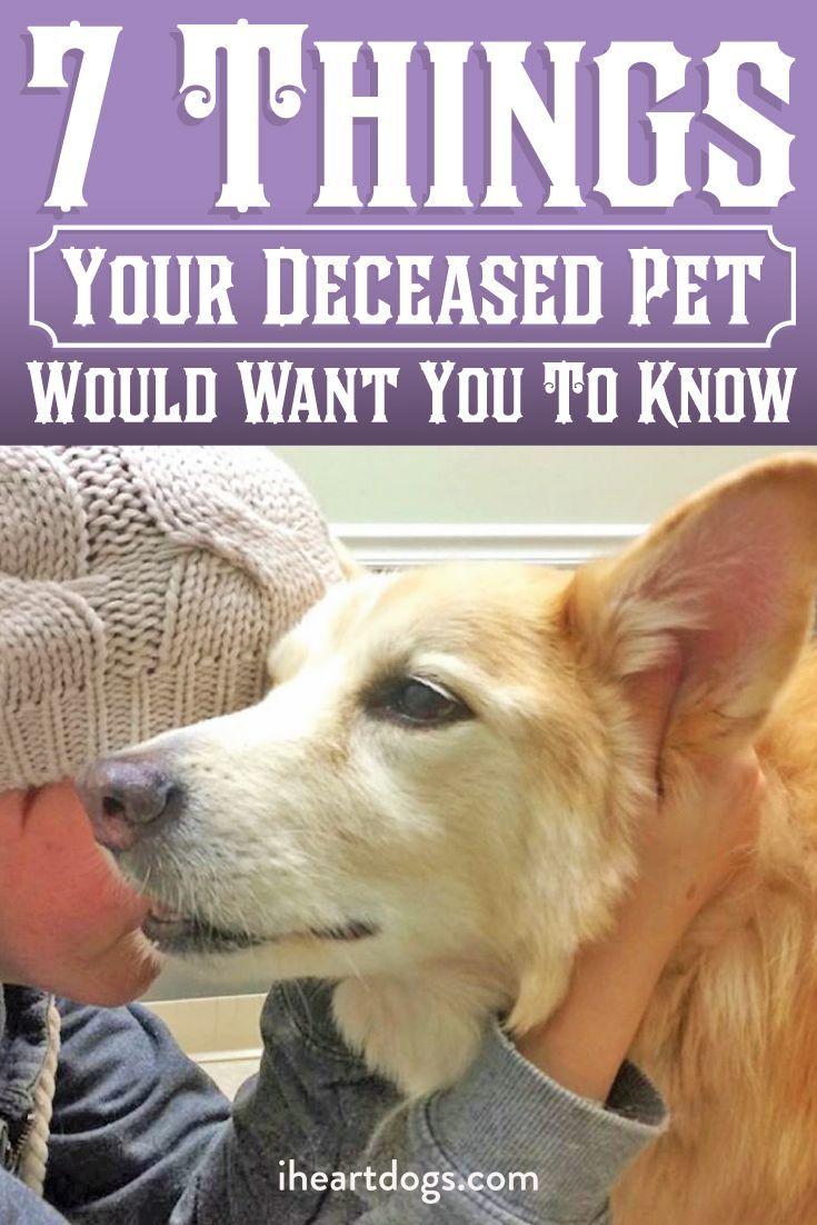 7 things your deceased pet would want you to know dog