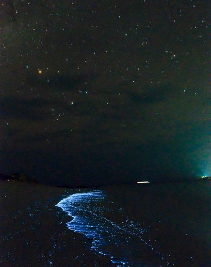 Pictures Glowing Blue Waves Explained Maldives Island Beach - Maldive island beach glow
