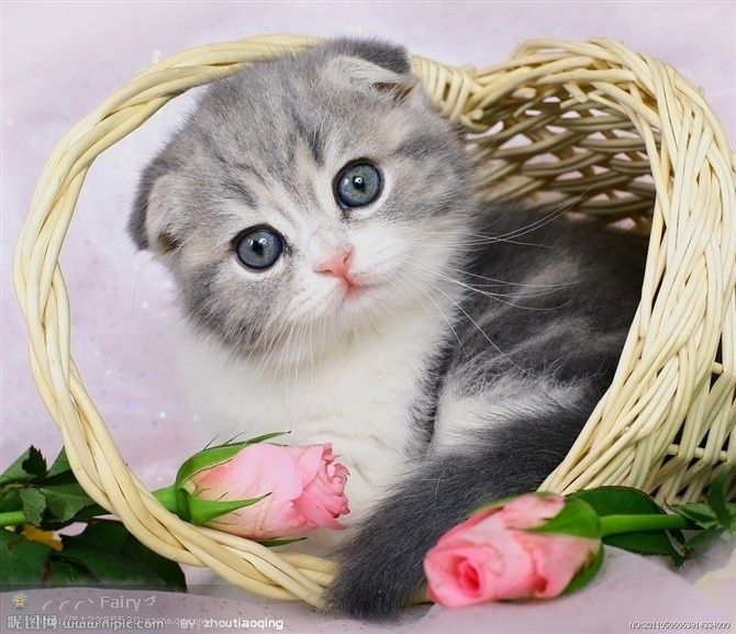 Adorable Cat http://www.delta-homes.com/ar/picture_detail.html?imgid=40818