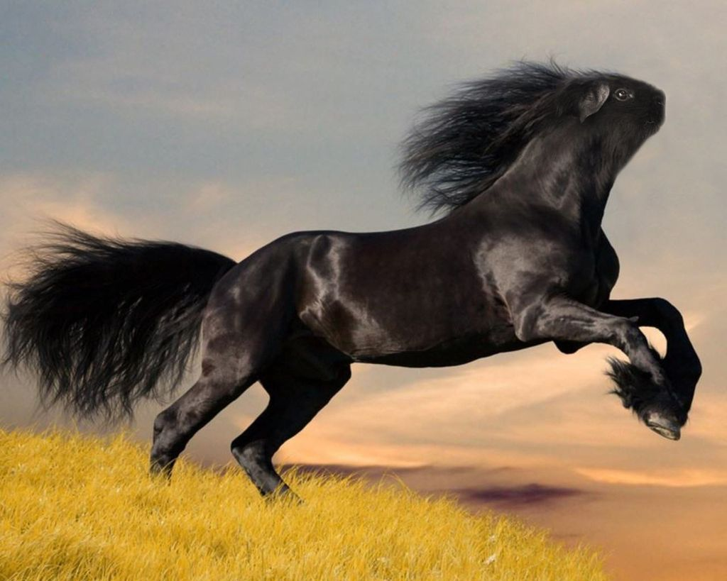 Must see Wallpaper Horse Creepy - 6866389a6495c704b67e9405b85ef9a4  Pictures_207843.jpg