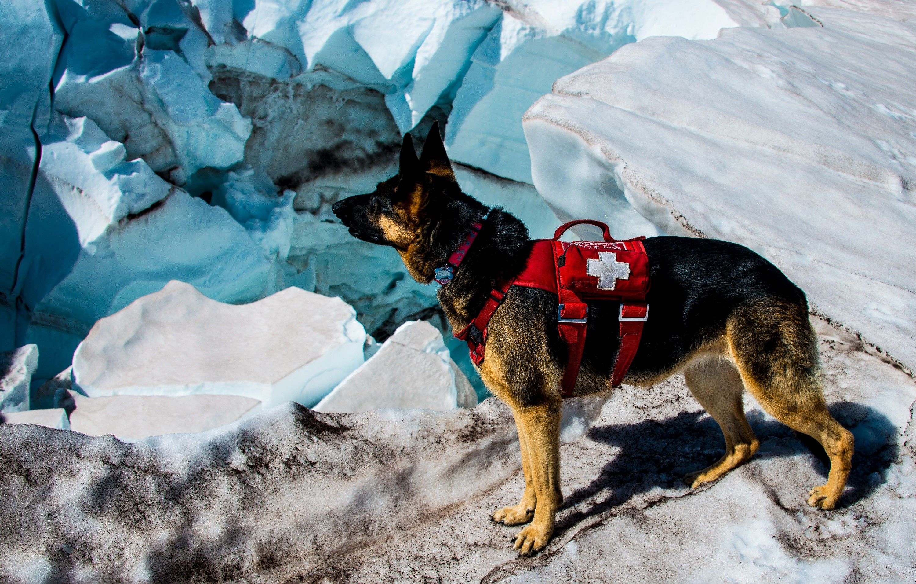 Cirrus, glacier dog to the rescue at Crystal Mountain in