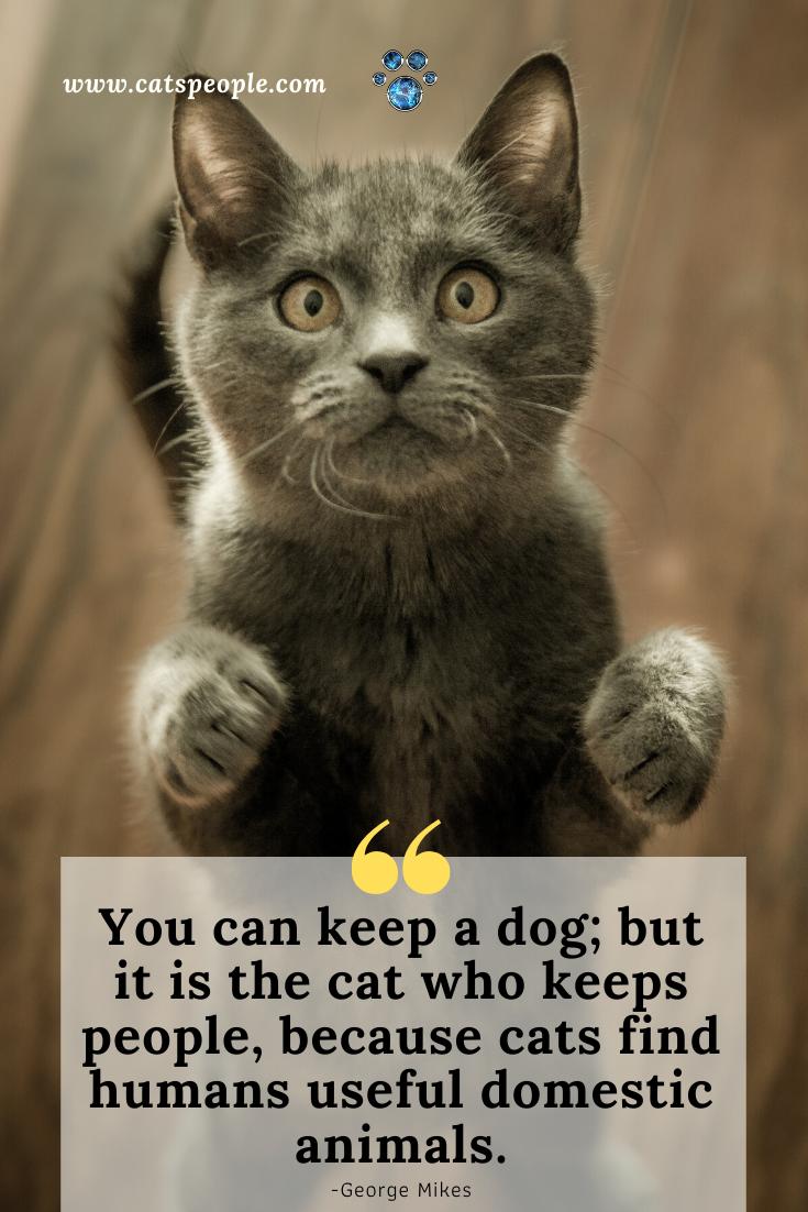 Funny Cat Quote Cat Quotes Cat Quotes Funny Cat Parenting