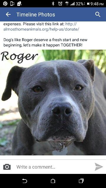Roger Southfield Michigan Almost Home No Kill Shelter Adopt
