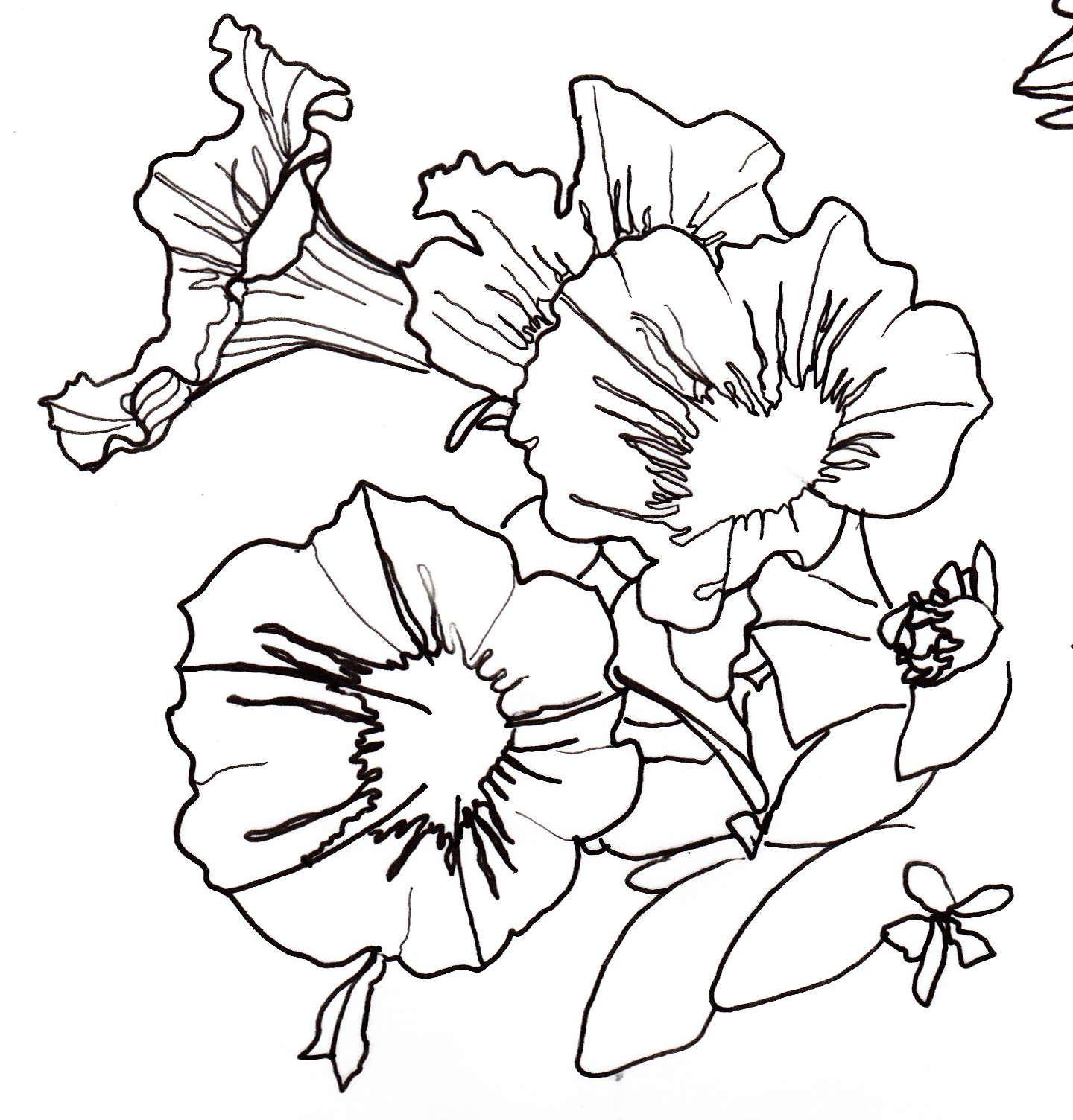 Flower Line Art Images: Line Art Drawings, Drawings