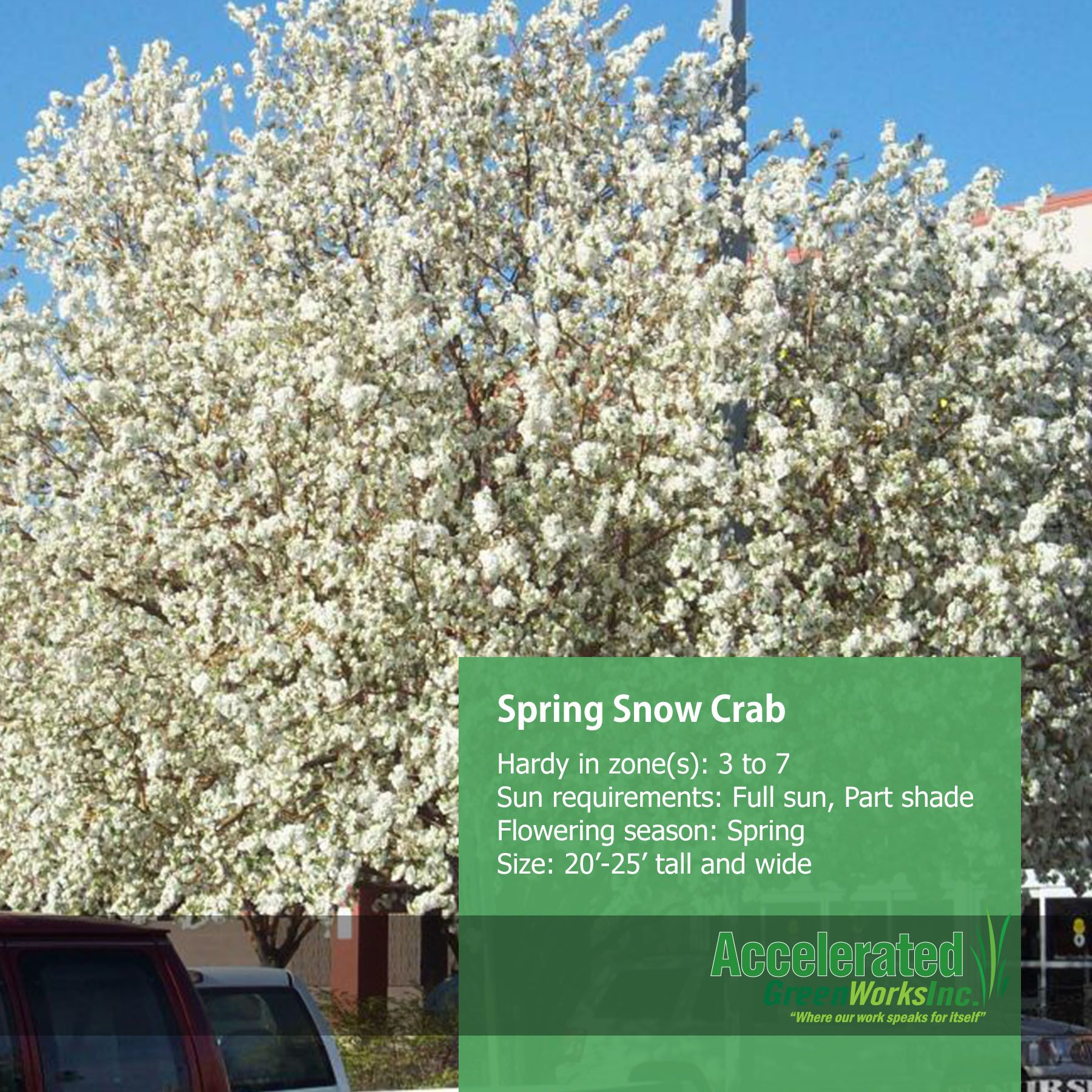 Spring Snow Crab Trees Pinterest Outdoor Ideas