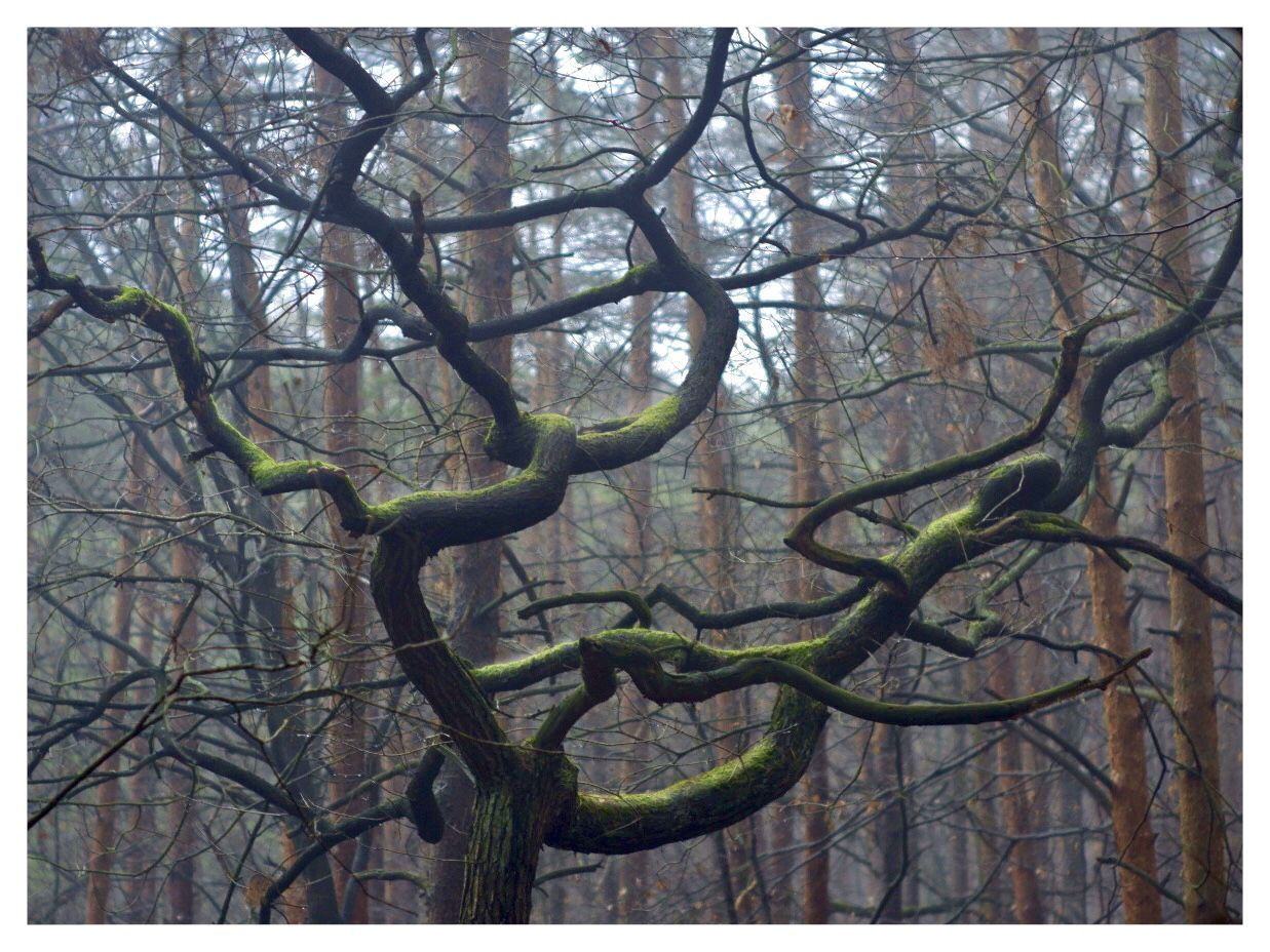 Just walking around the Kokořín forest and this crazy tree stands out like a sore thumb.  #czechia #naturephotography #fujixt100 #ig_landscape #theworldshotz #landscapephotography 