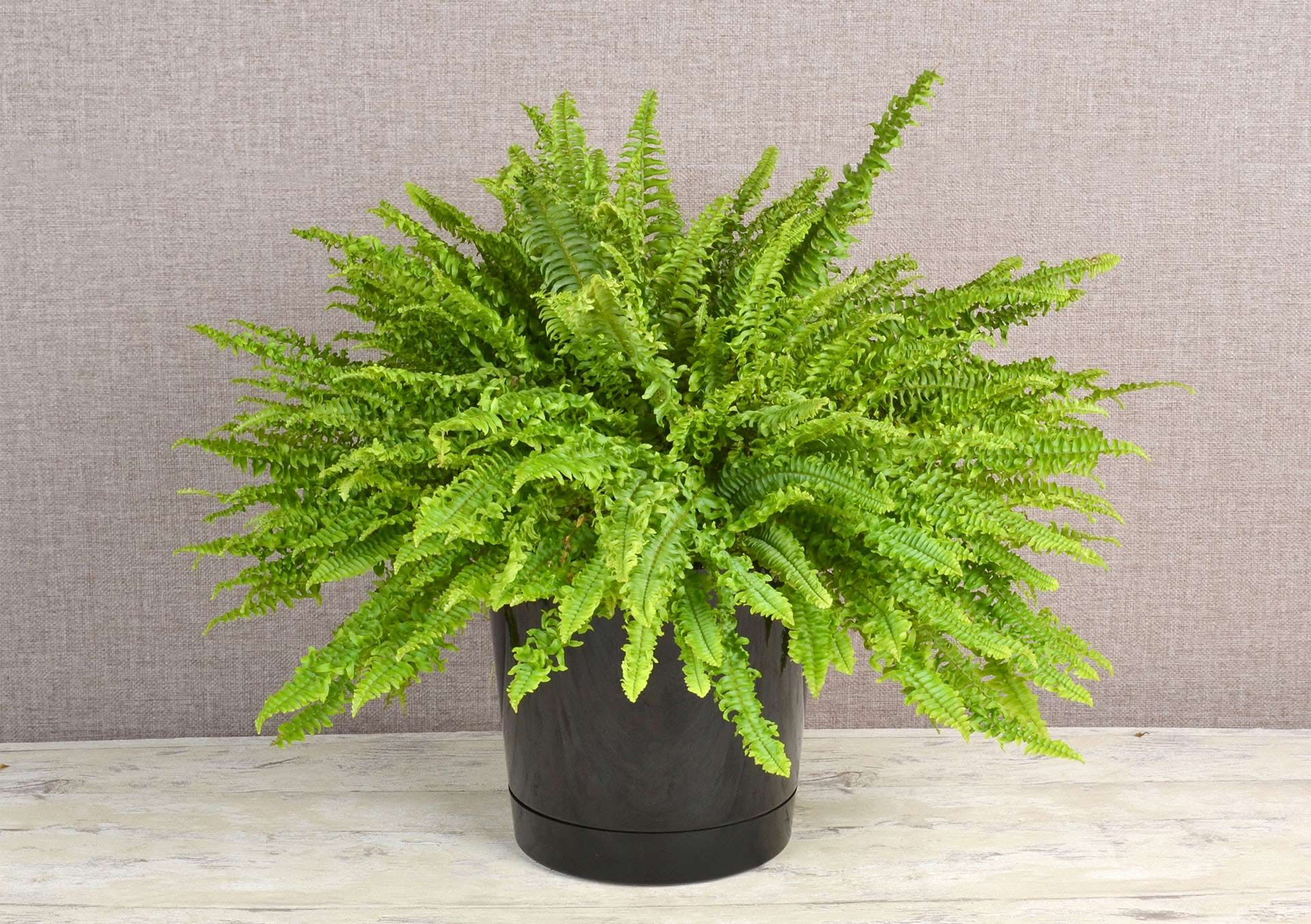 Green Indoor Plants for Sale and Delivery From Bachman's