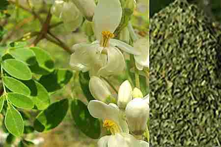 Usos de la semilla de moringa para adelgazar