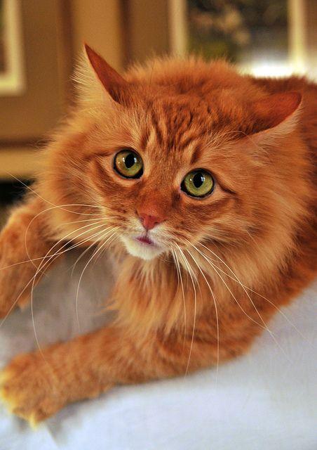 yeoww catnip toys
