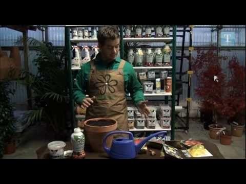 Cómo plantar bulbos de otoño