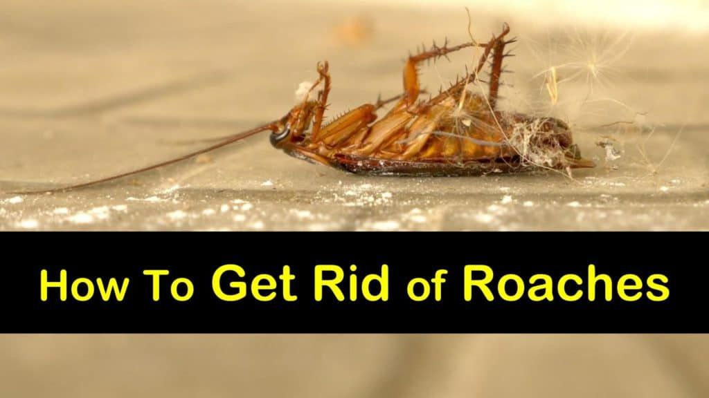 How To Get Rid Of German Roaches Fast