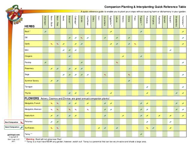 Companion Planting And Interplanting Quick Reference Table  I Want
