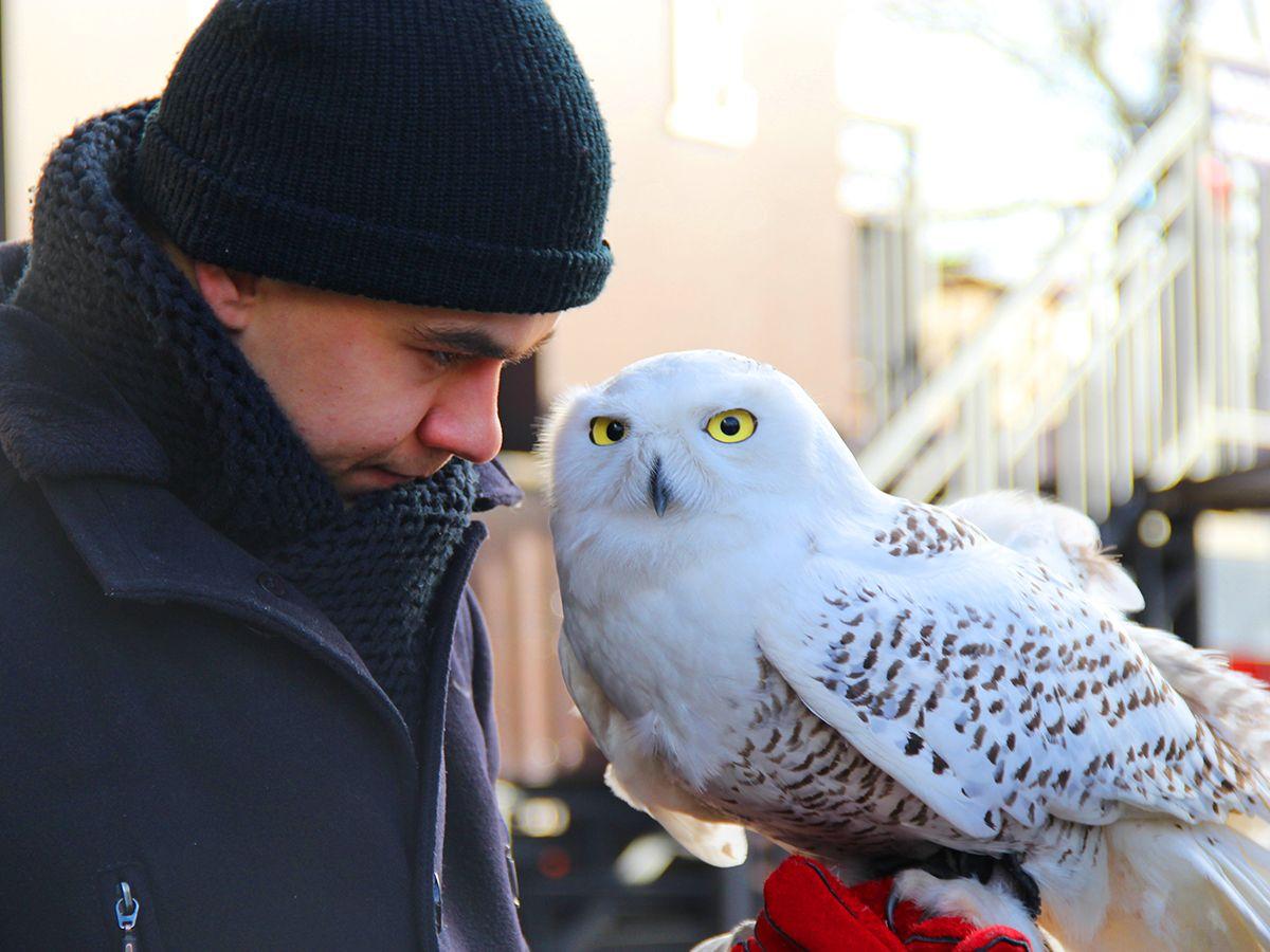 Полярная сова Полина и орнитолог