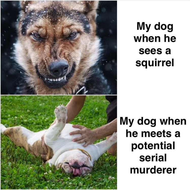 Funny Animal Memes Of The Day 24 Pics Funny Animal Memes Animal Memes Funny Animal Pictures