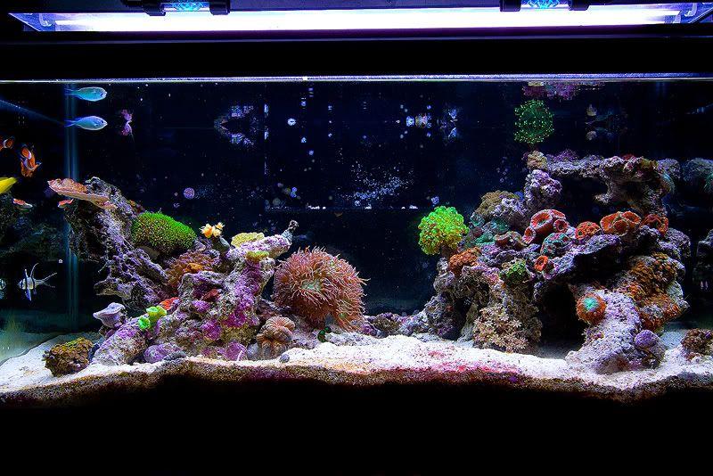 Salt Tank Rockscape Coral Aquarium Saltwater Tank Aquarium Fish