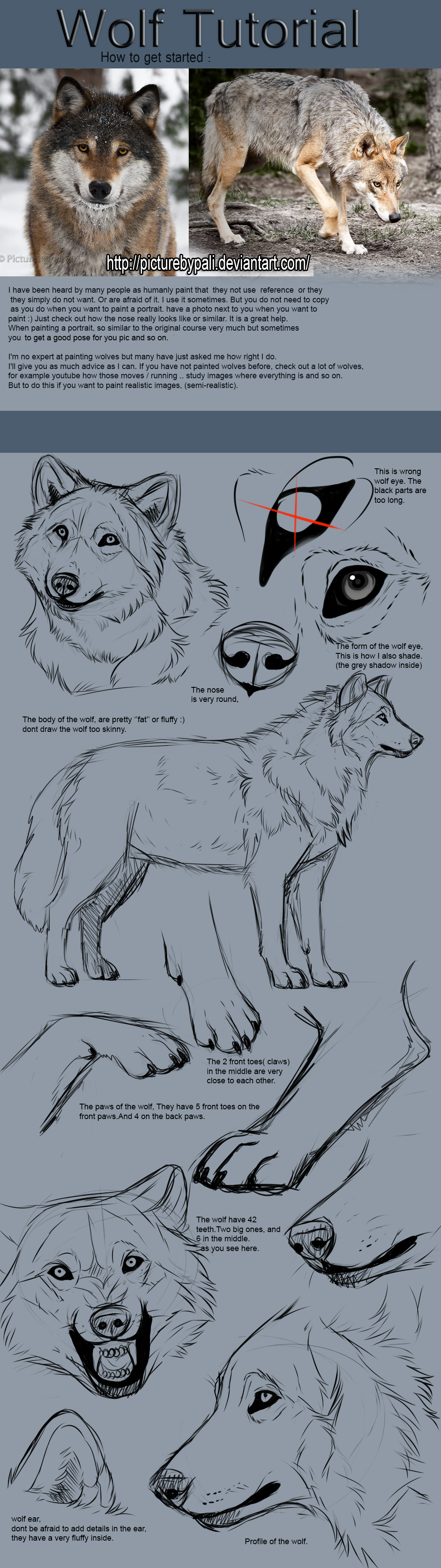 Wolf tutorial by themysticwolf on deviantart much need much want wolf tutorial by themysticwolf on deviantart much need much want ccuart Image collections