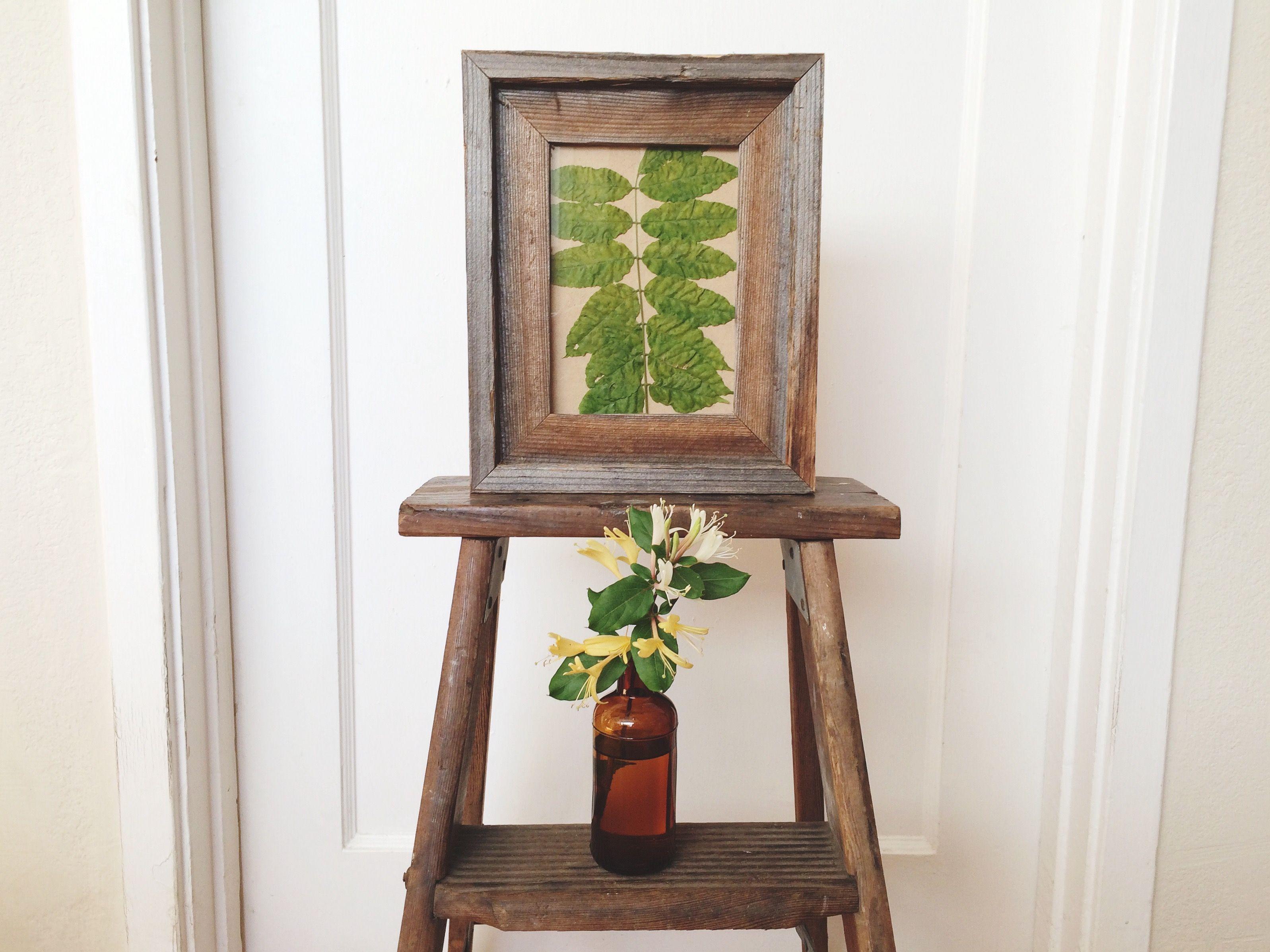 Flora Fauna Study Reclaimed Wood 5x7 Frame By Alibi Interiors