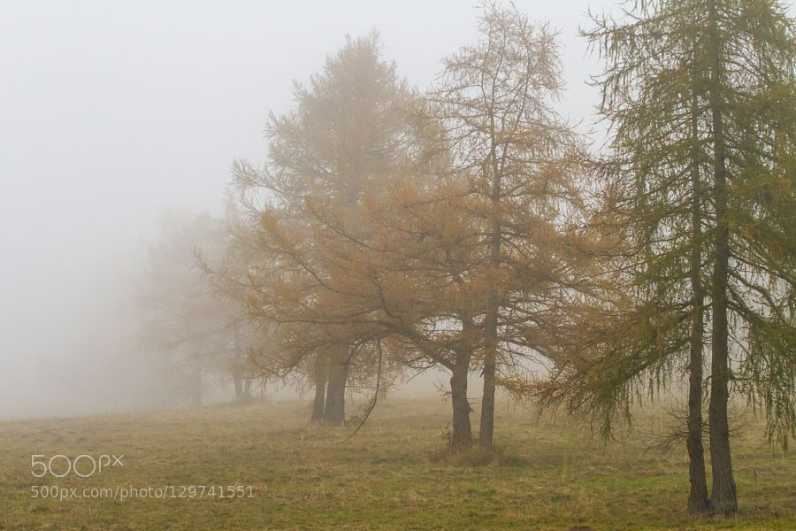 nebbia by androidi81 #nature