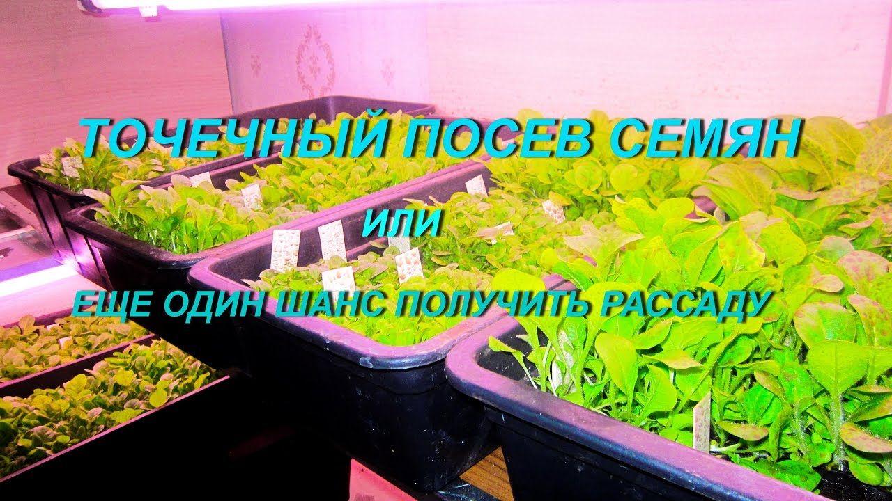 посев семян табака