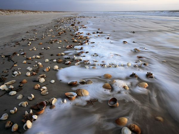 Cumberland Island, GA, one of the best spots for shells.  Small, restricted access, a place from the past.
