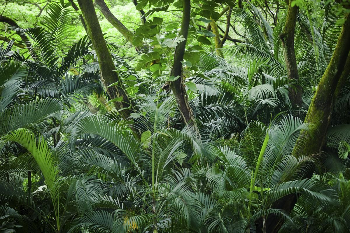 Pin By Megan Lyford On Referenser Rainforest Tropical Rainforest Plant Leaves