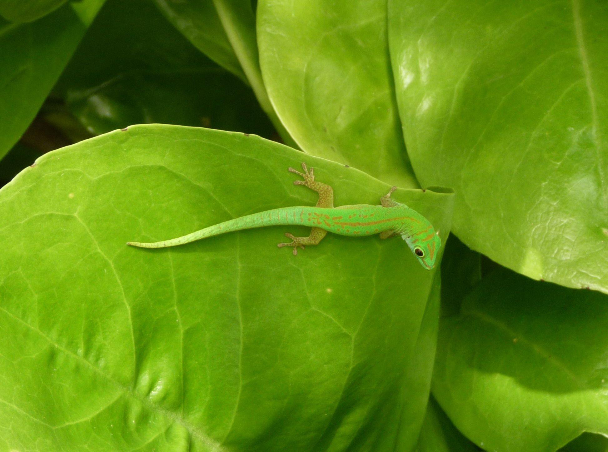 #green /Seychellen