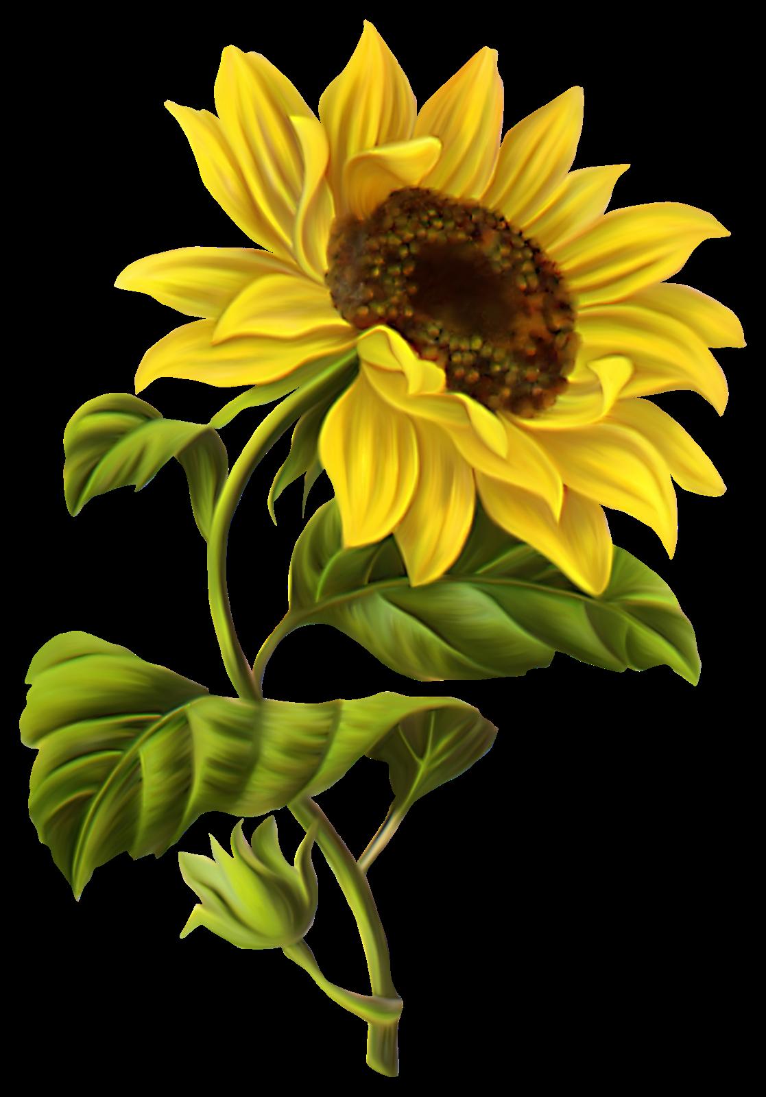 Sunflowers png google search pinterest for Girasoli tumblr