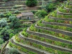 Portugal: 10 destinos imperdíveis para quem adora um bom vinho