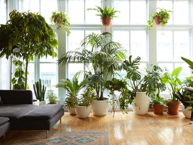houseplants that can survive urban apartments apartment therapy pinterest plants indoor and also rh
