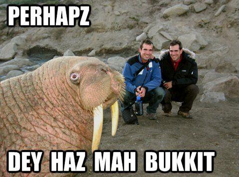 Alaskan baby walrus seeks bukkit in New York / Boing Boing