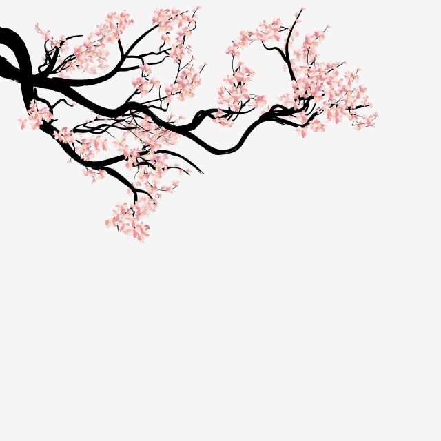 Sakura Blossom Hand Drawn Flower Watercolor Hand Branch Spring Cherry Isolated White Nature Plum Beauty Cherry Blossom Drawing Cherry Blossom Art Tree Drawing