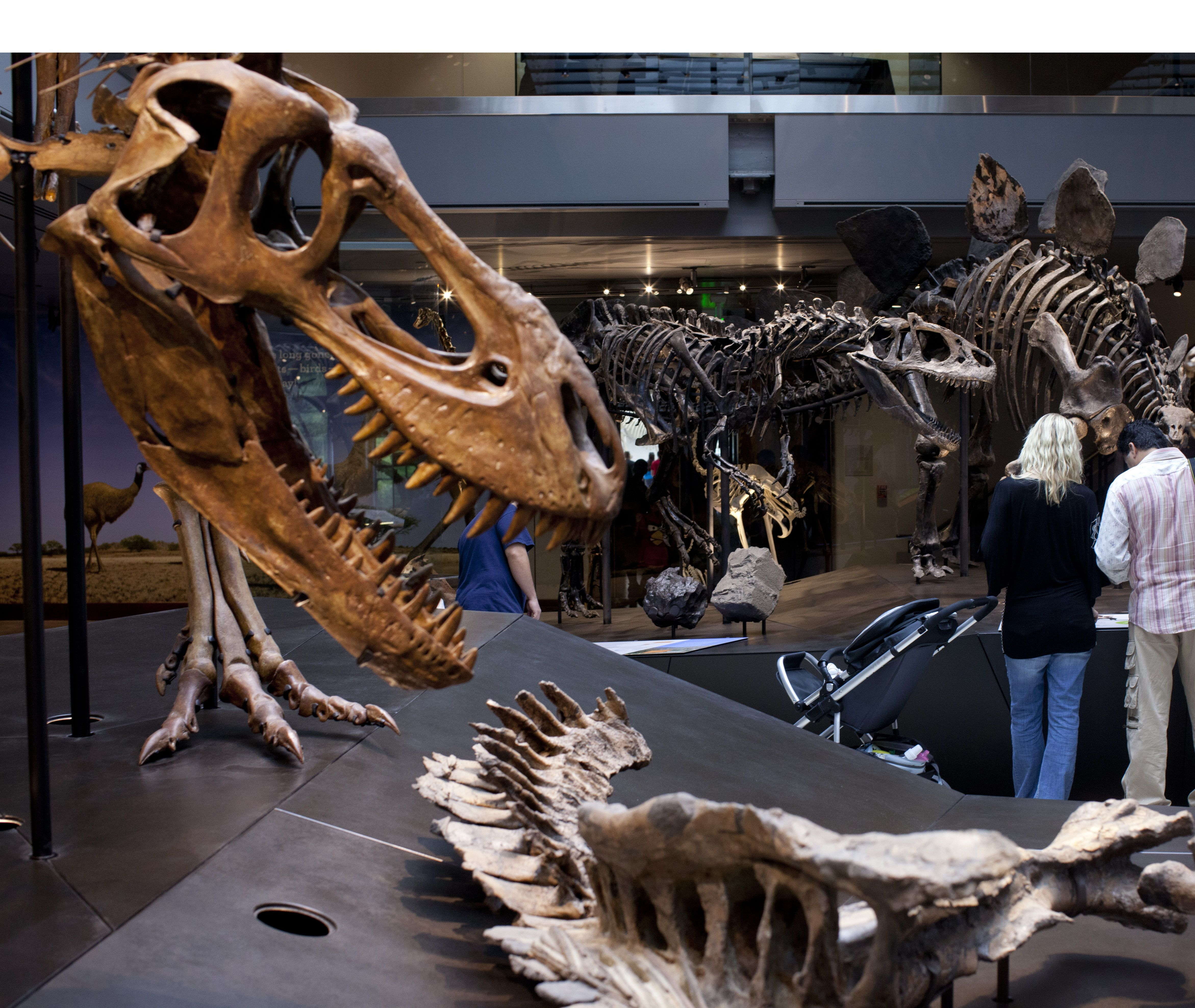 L A Science Weekend Natural History And Space May 10 2019 Atlas Obscura Trips Natural History History Zoology
