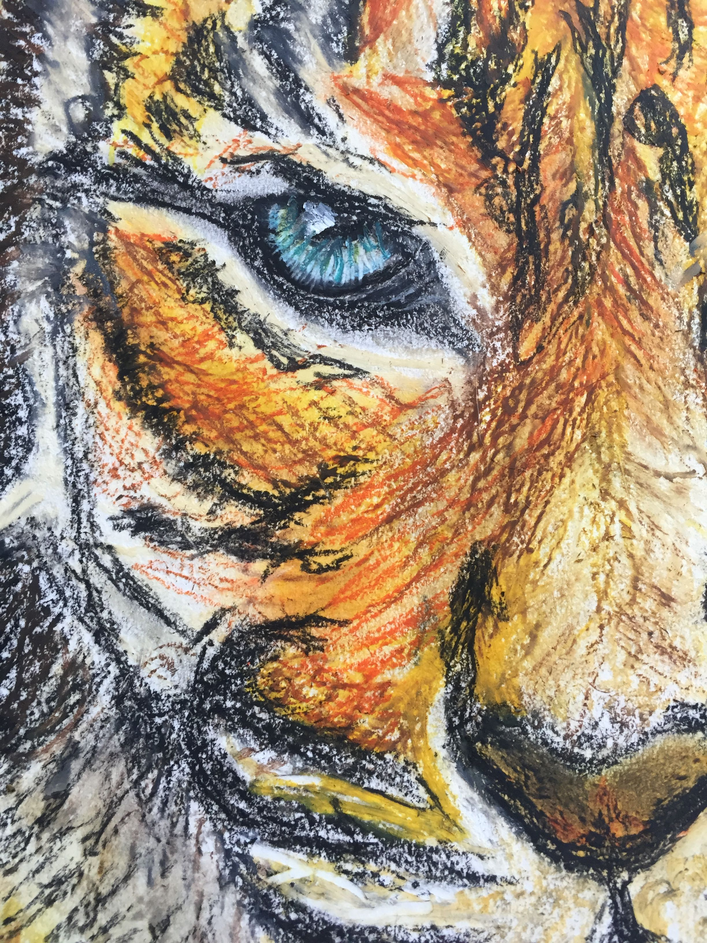Oilpastel original drawing animals tiger tigerart blending shading find this pin and more on oil pastel drawings