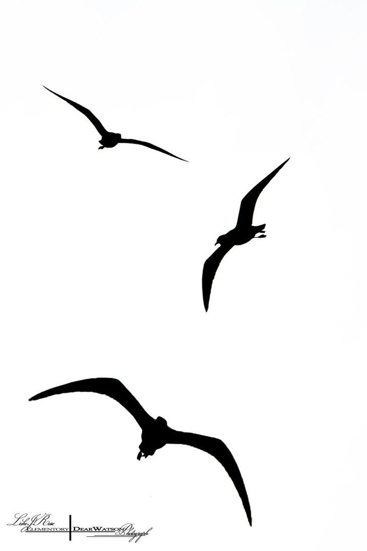Pin Bird Silhouette Tattoo Heineken
