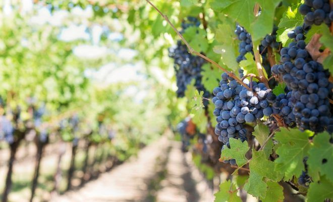 5 Fast Facts About Fredericksburg's Wine Road 290