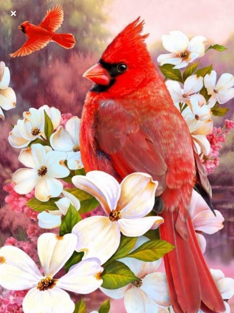 Pin De Yunue Escudero En Birds Arte De Aves Pajaros De Colores Pajaros Cardenales