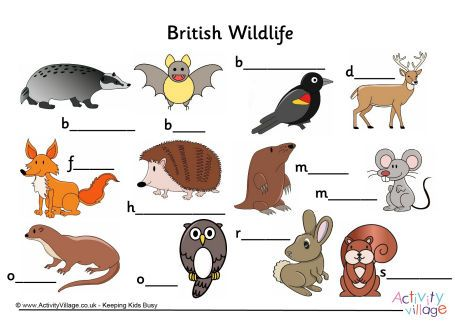label the british wildlife worksheet nature explorers british wildlife wildlife animals. Black Bedroom Furniture Sets. Home Design Ideas