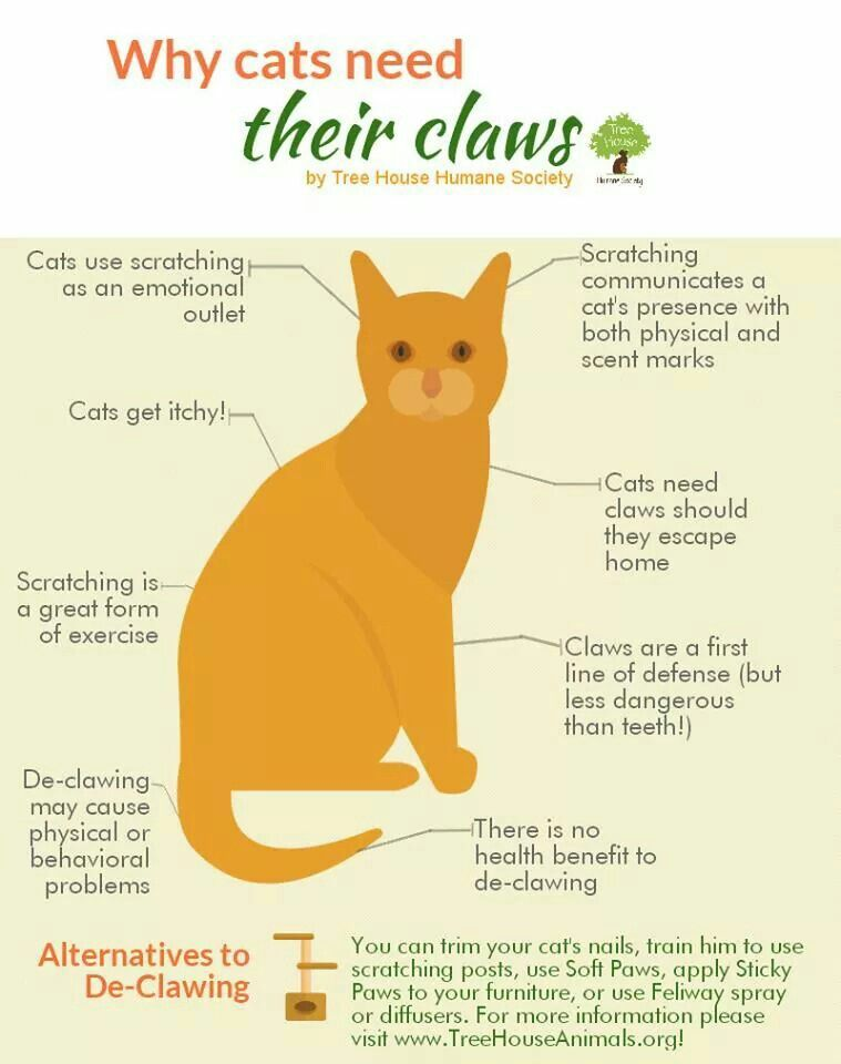 Why Cats Need Their Claws Cat Care Cat Care Tips Cat Training