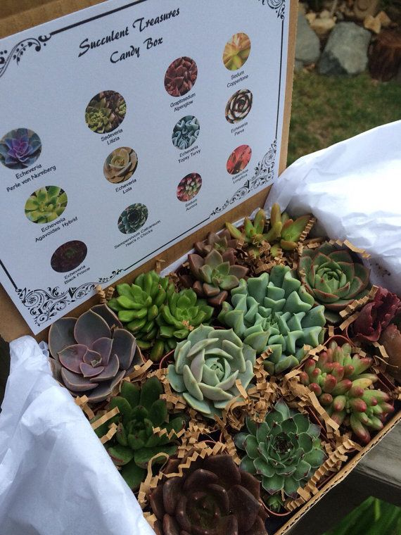 Motheru0027s Day gift idea a dozen succulents & Weekend Shopping: Motheru0027s Day Guide! | Gift Ideas | Succulent gifts ...