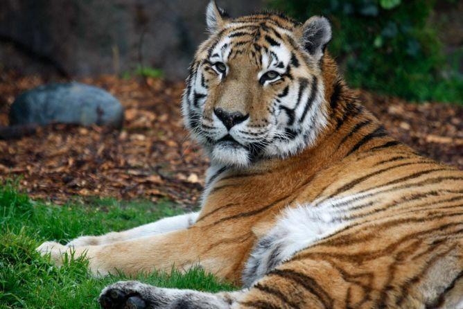13 des espèces animales qui risquent de disparaître en 2015