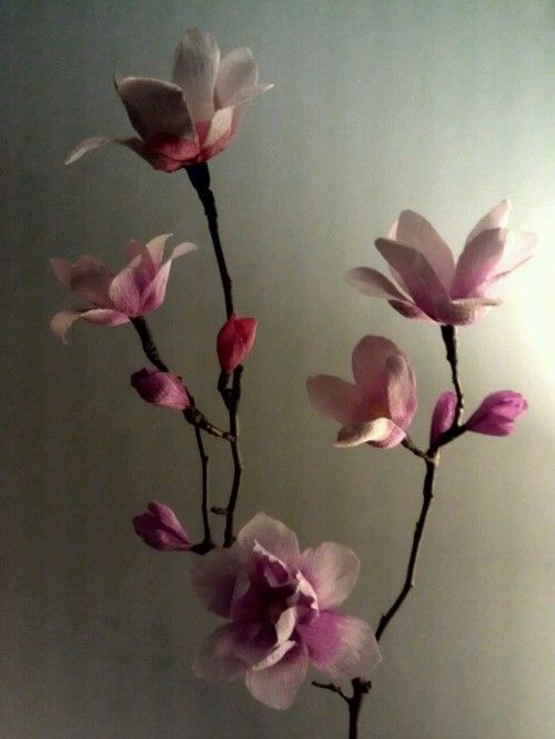 Do it yourself paper magnolias butterfly flowers pinterest do it yourself paper magnolias mightylinksfo Images