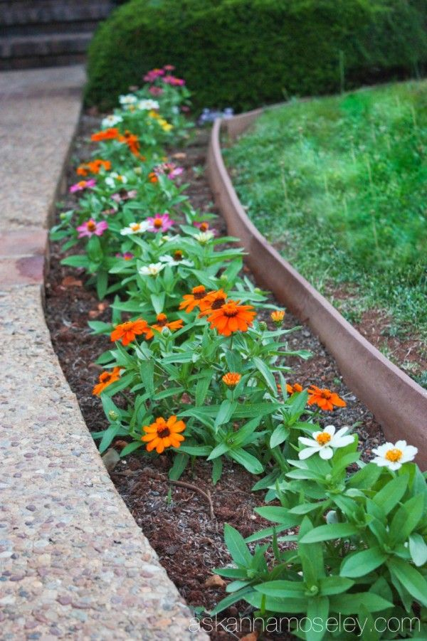 How to Save Water When Watering Plants Ask Anna Garden