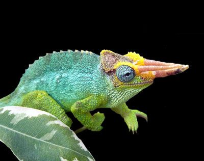chameleon on forest floor - Google Search | Turtles ...