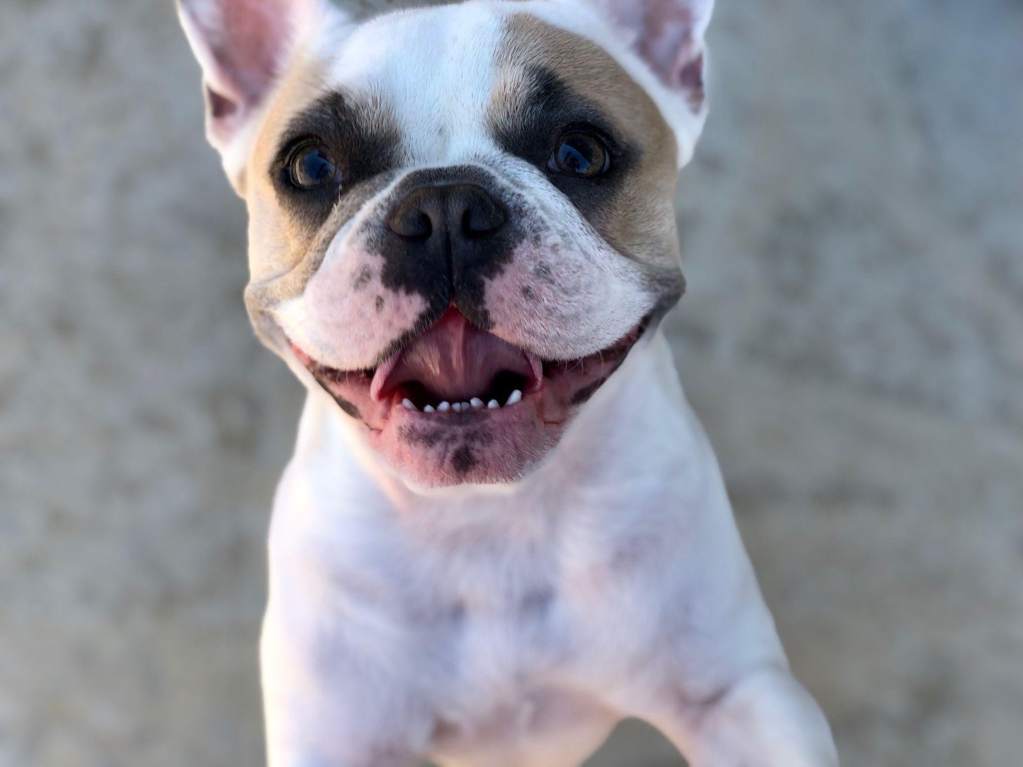 Pin On Insure My Dog