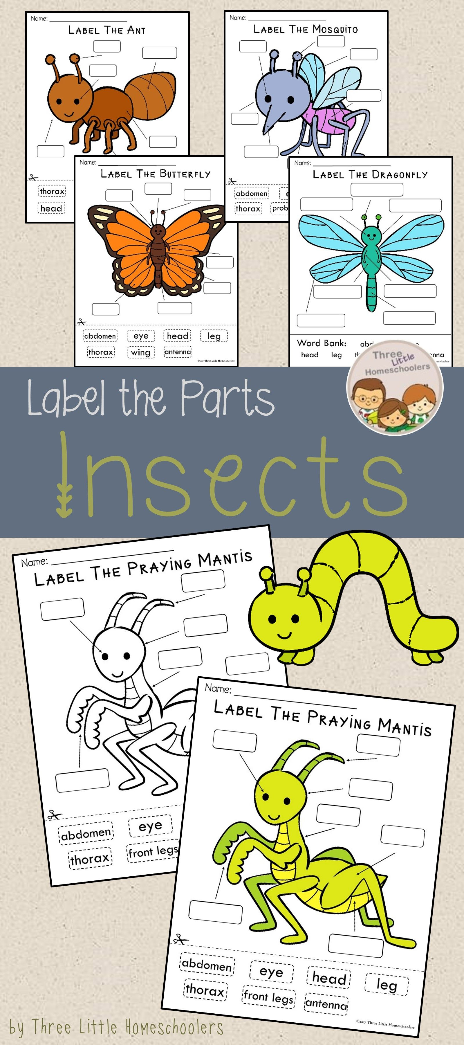 Insects Bugs And Spiders Labeling Center Activities Blog