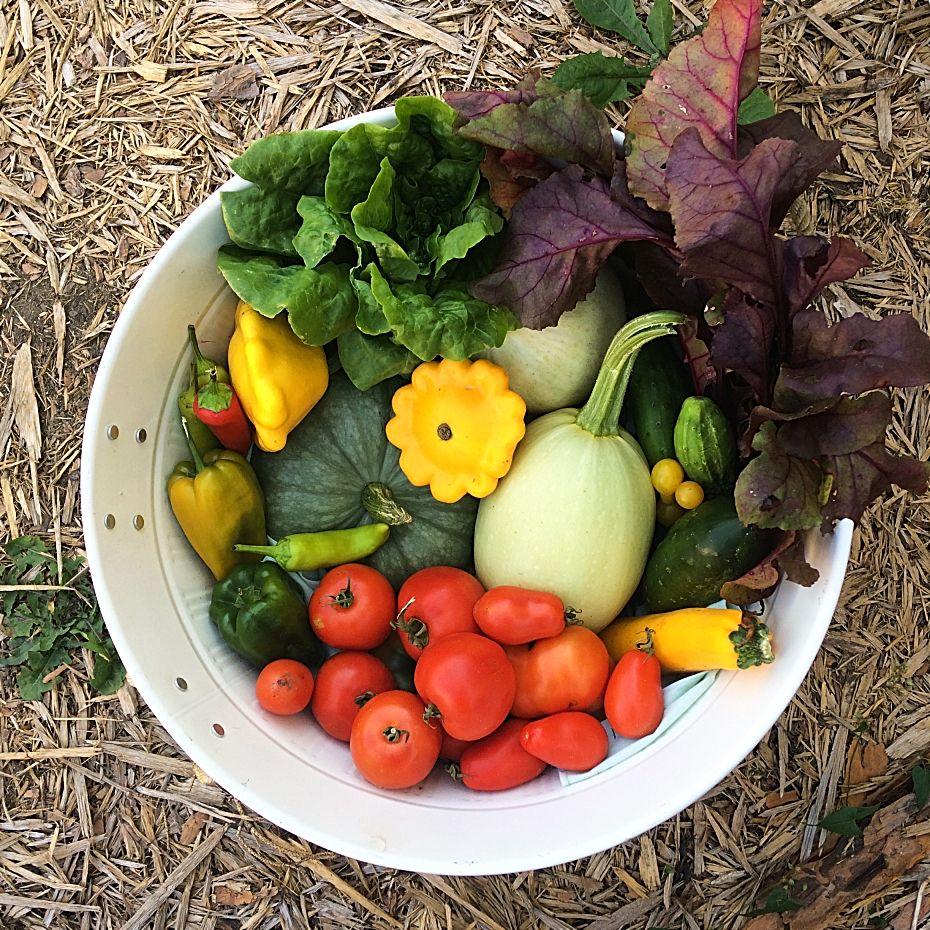 Urban Vegetable Gardening For Beginners: Cold-Climate Vegetable Gardening For The Complete Beginner