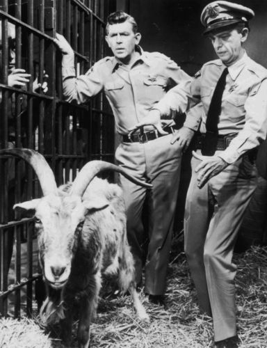 THE ANDY GRIFFITH TAYLOR TV SHOW DON KNOTTS BARNEY FIFE LOADED GOAT 8 X 10 PHOTO
